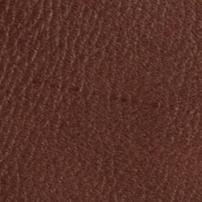 Nigela bruin